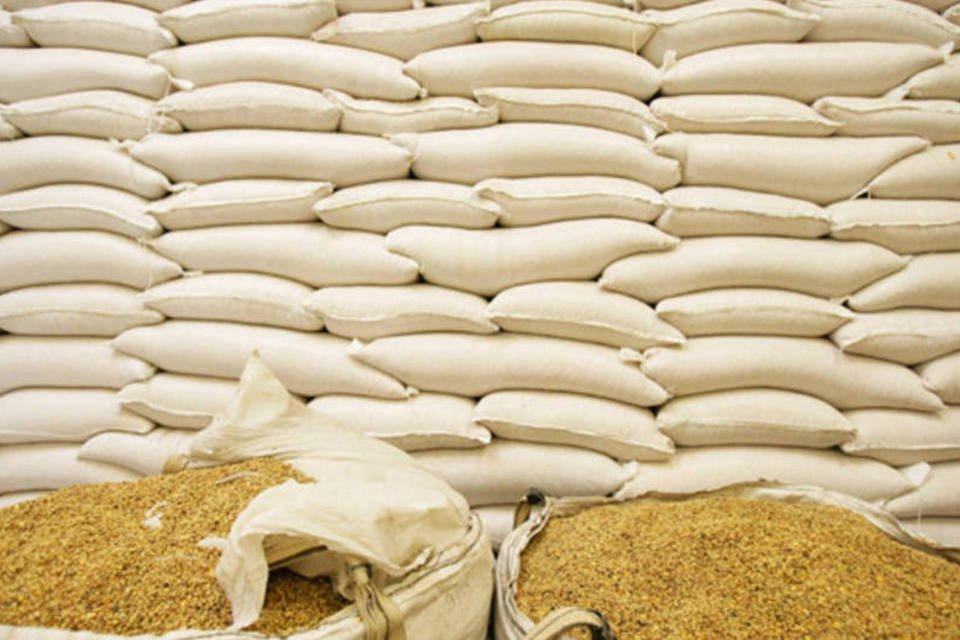 Grãos de milho em sacos para exportação