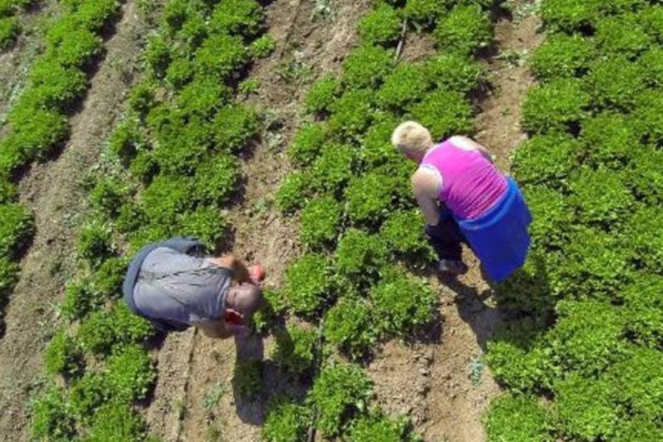Agricultores em plantação