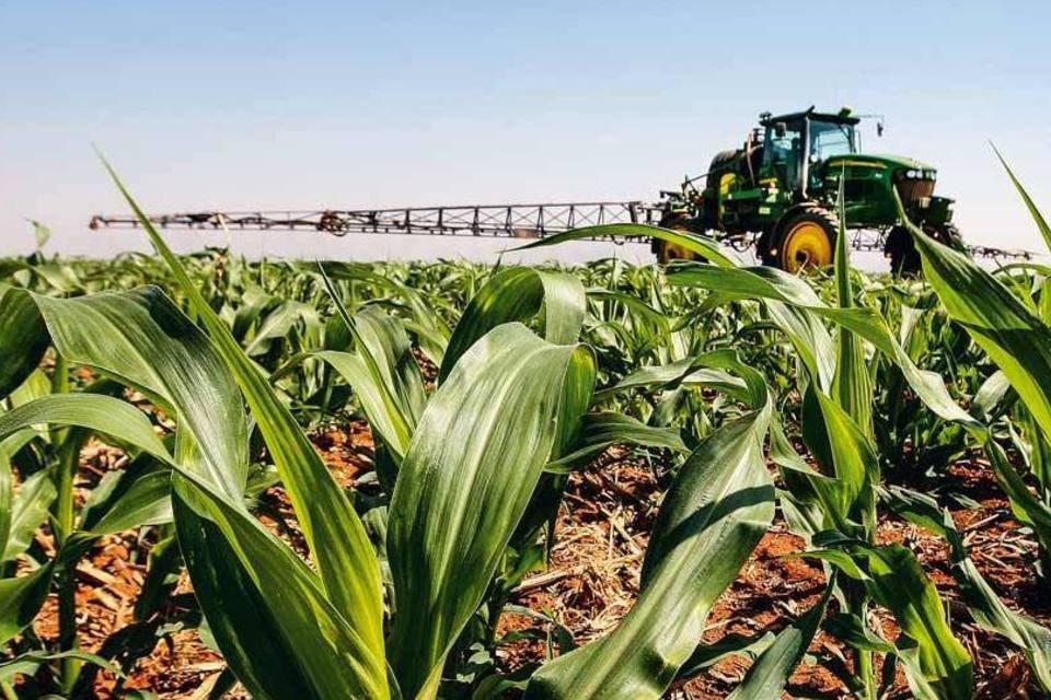 Chuvas devem retornar no fim de maio e ajudar lavouras de milho no Brasil