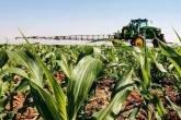 Plantação de milho em Goiás