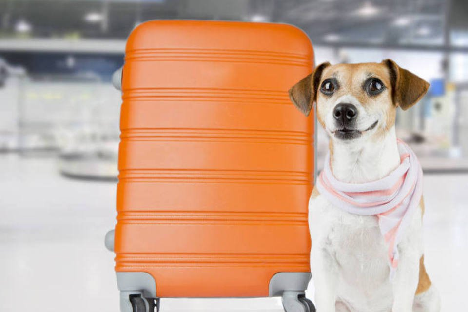 Cachorro e mala no aeroporto para viajar de avião