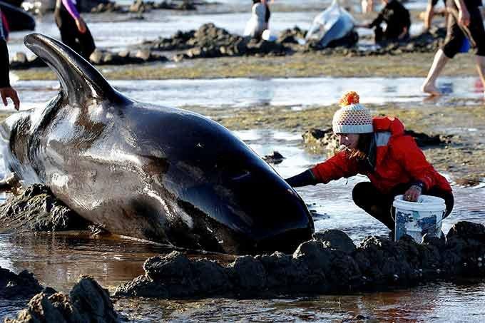 baleia-novazelandia