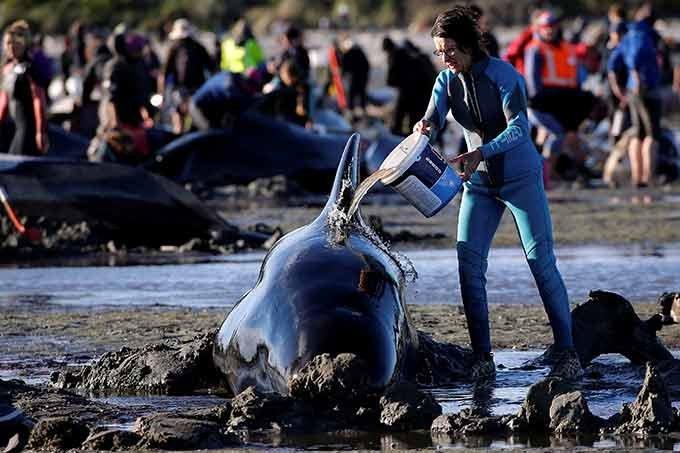 baleia-resgate