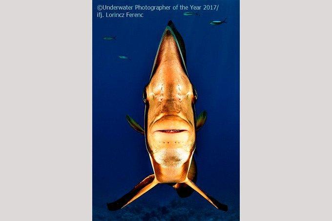 """Melhor fotografia na categoria """"retrato"""" no UPY London"""