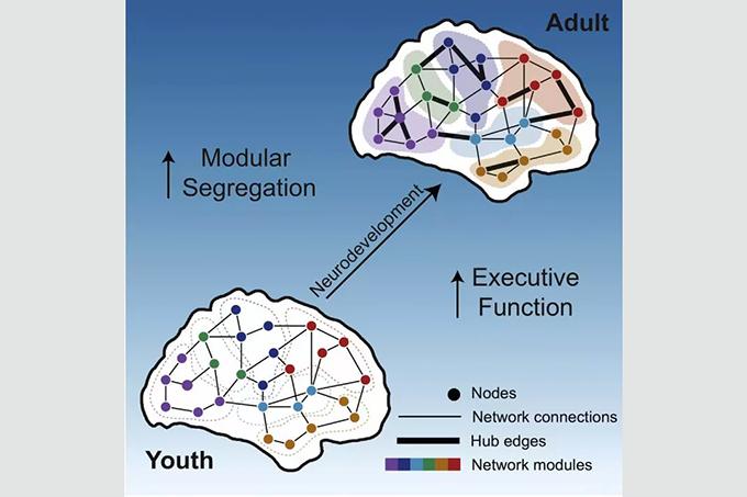 modular-brain-