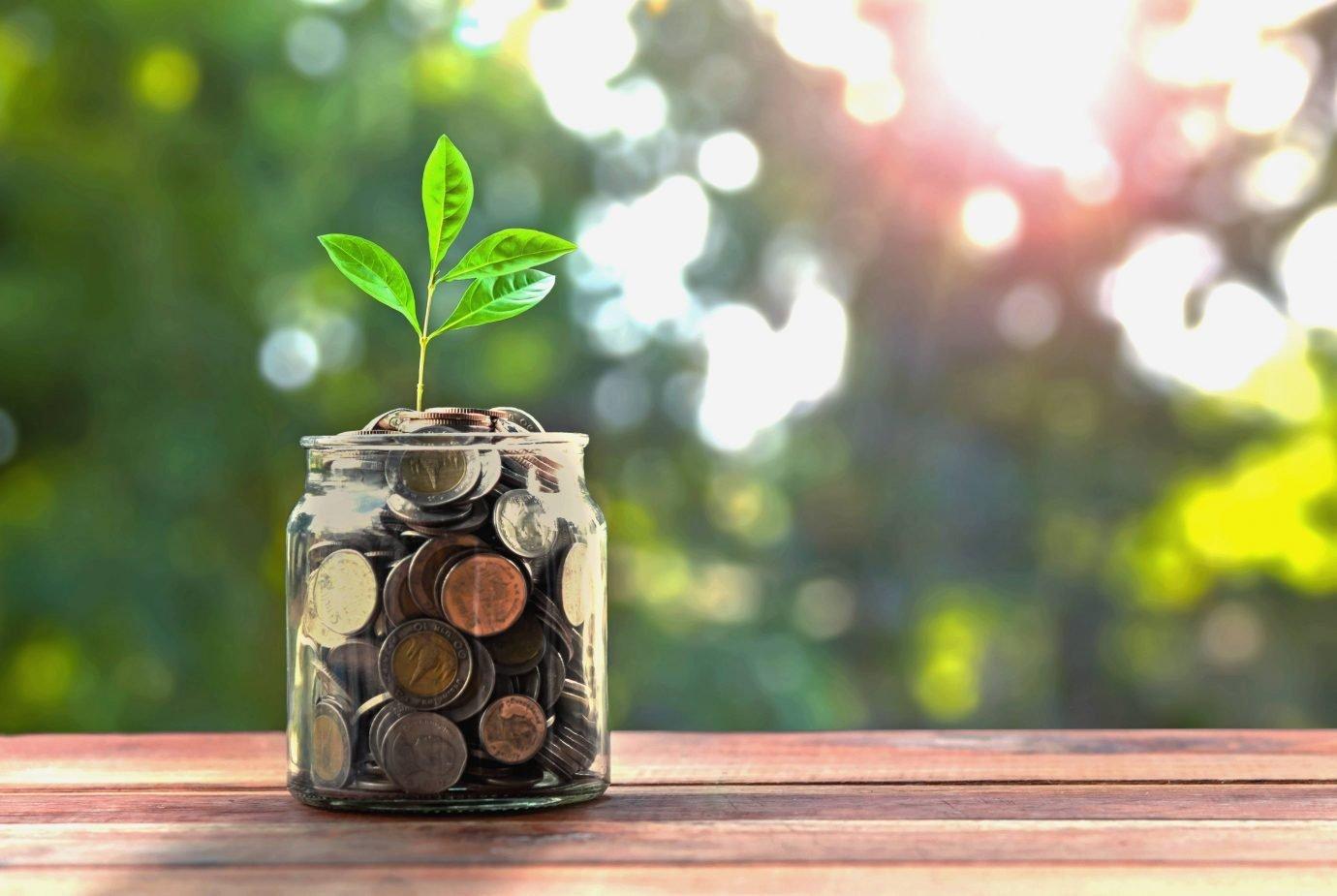 Moedas de dinheiro em vaso de planta: investimento
