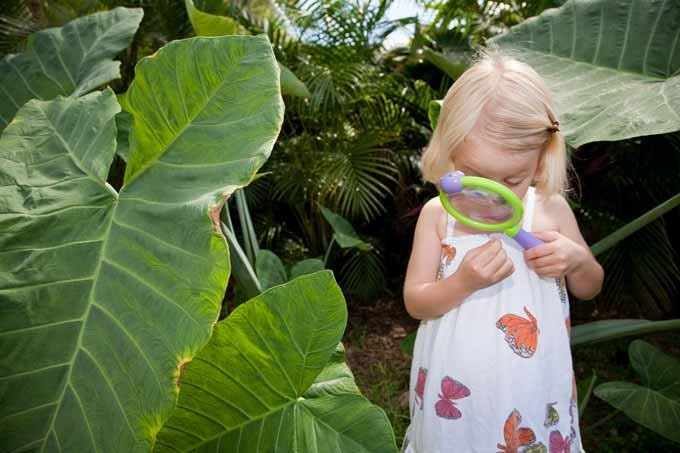 Menina brincando na natureza; criança na floresta; plantas