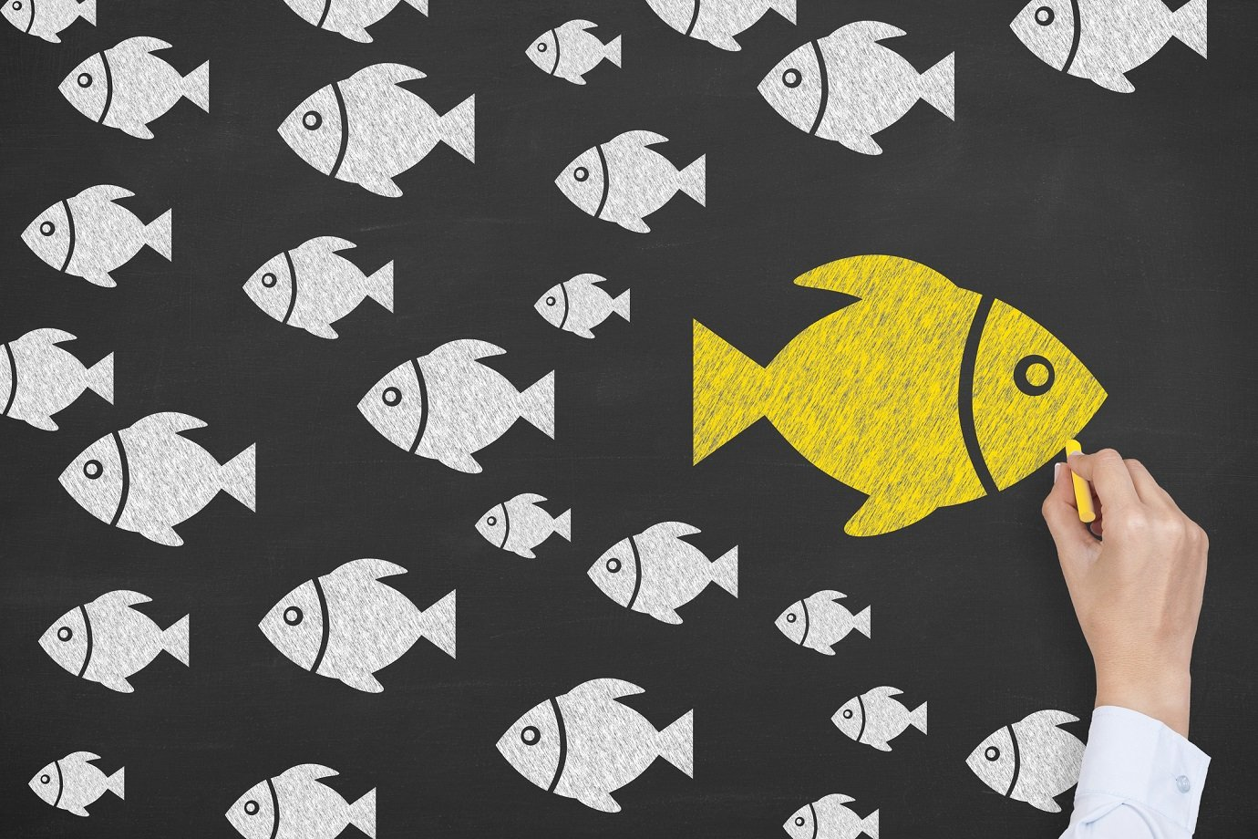 peixe, seu próprio caminho