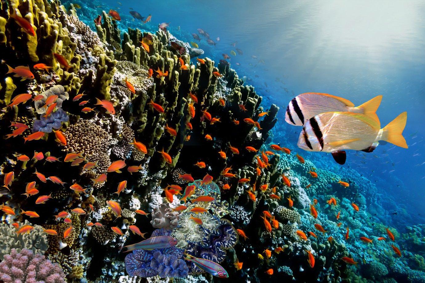 Coral nas ilhas Maldivas