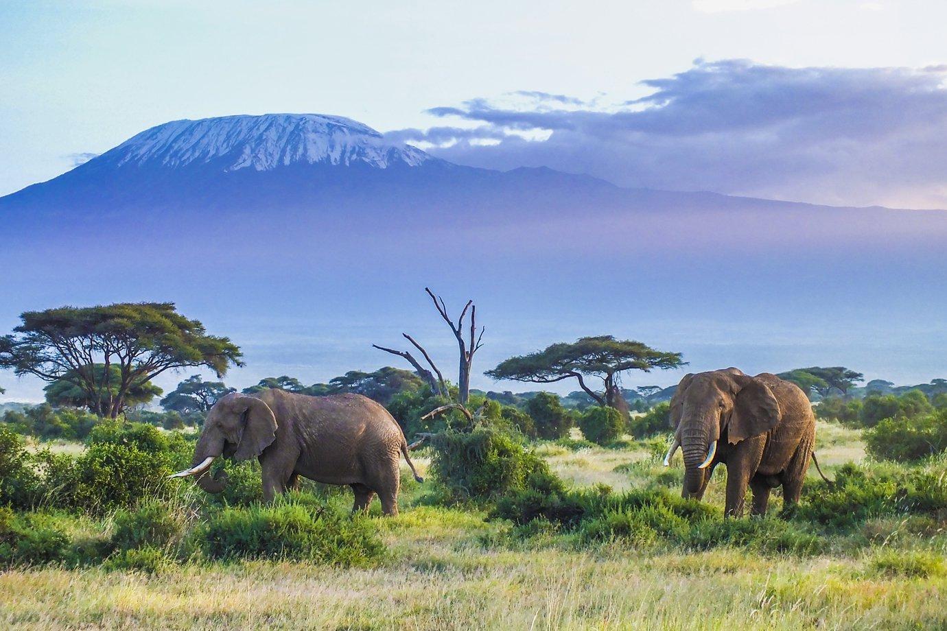 Safári no Quênia