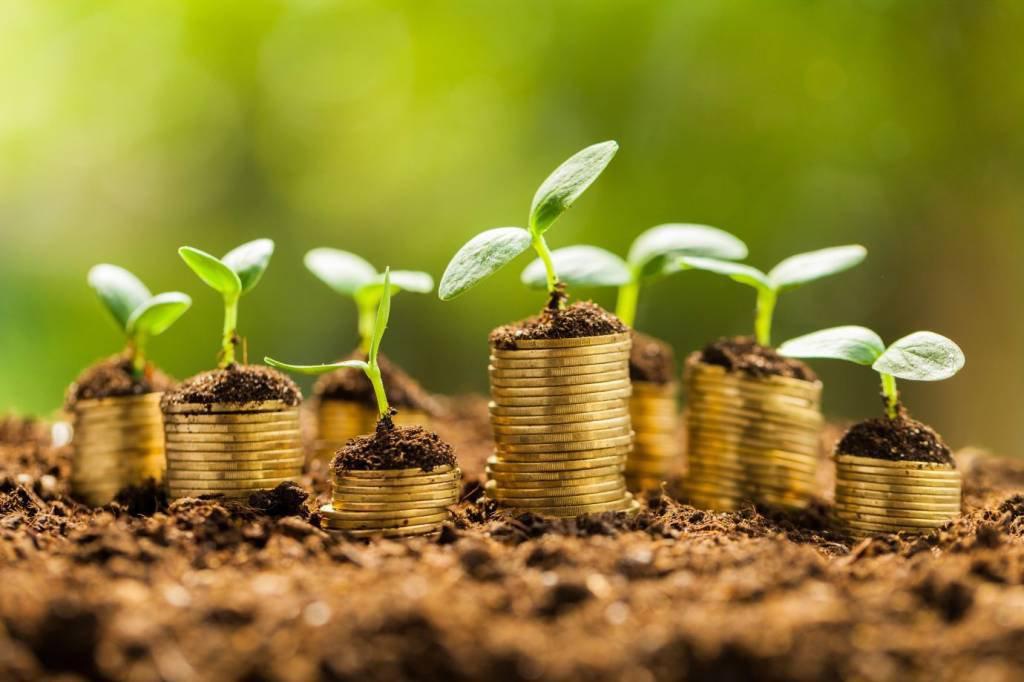 Moedas plantadas que viram árvores: investimento, dinheiro, planejamento