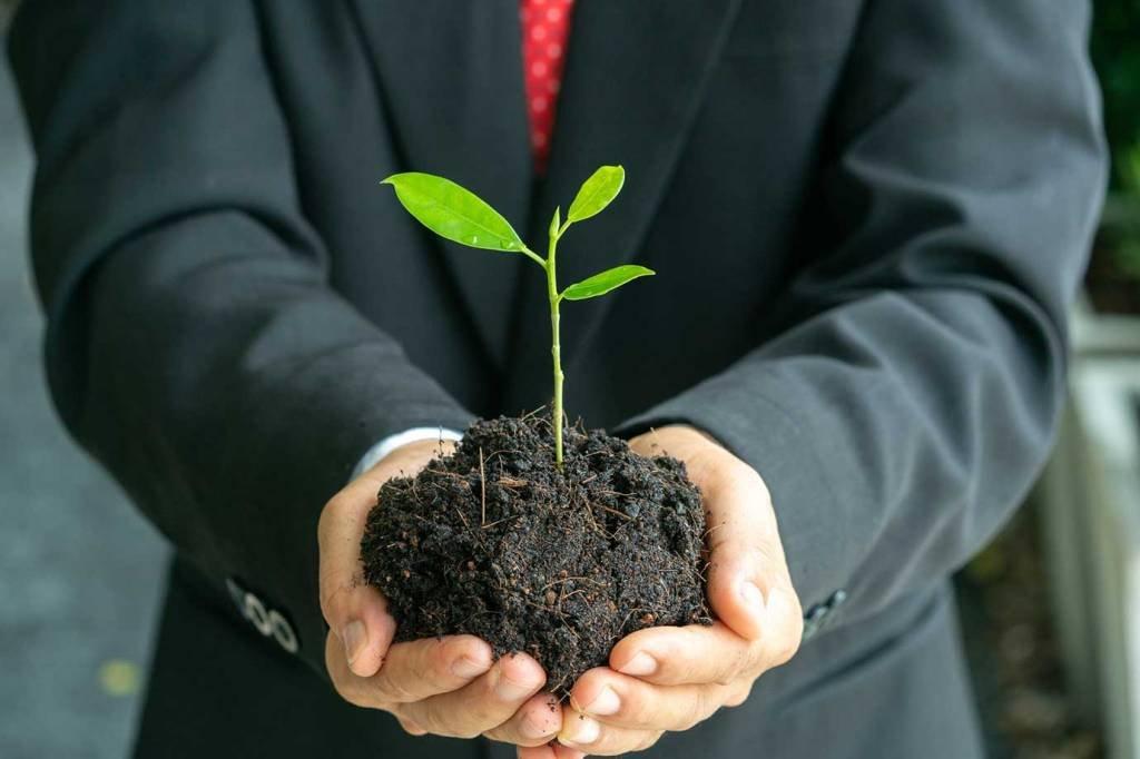 Homem de terno com muda de árvore nas mãos