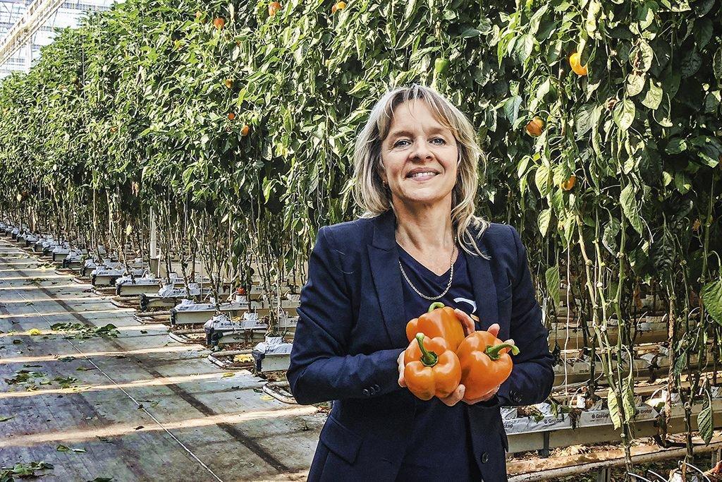 A agricultora holandesa Petra Barendse e seus pimentões da variedade laranja