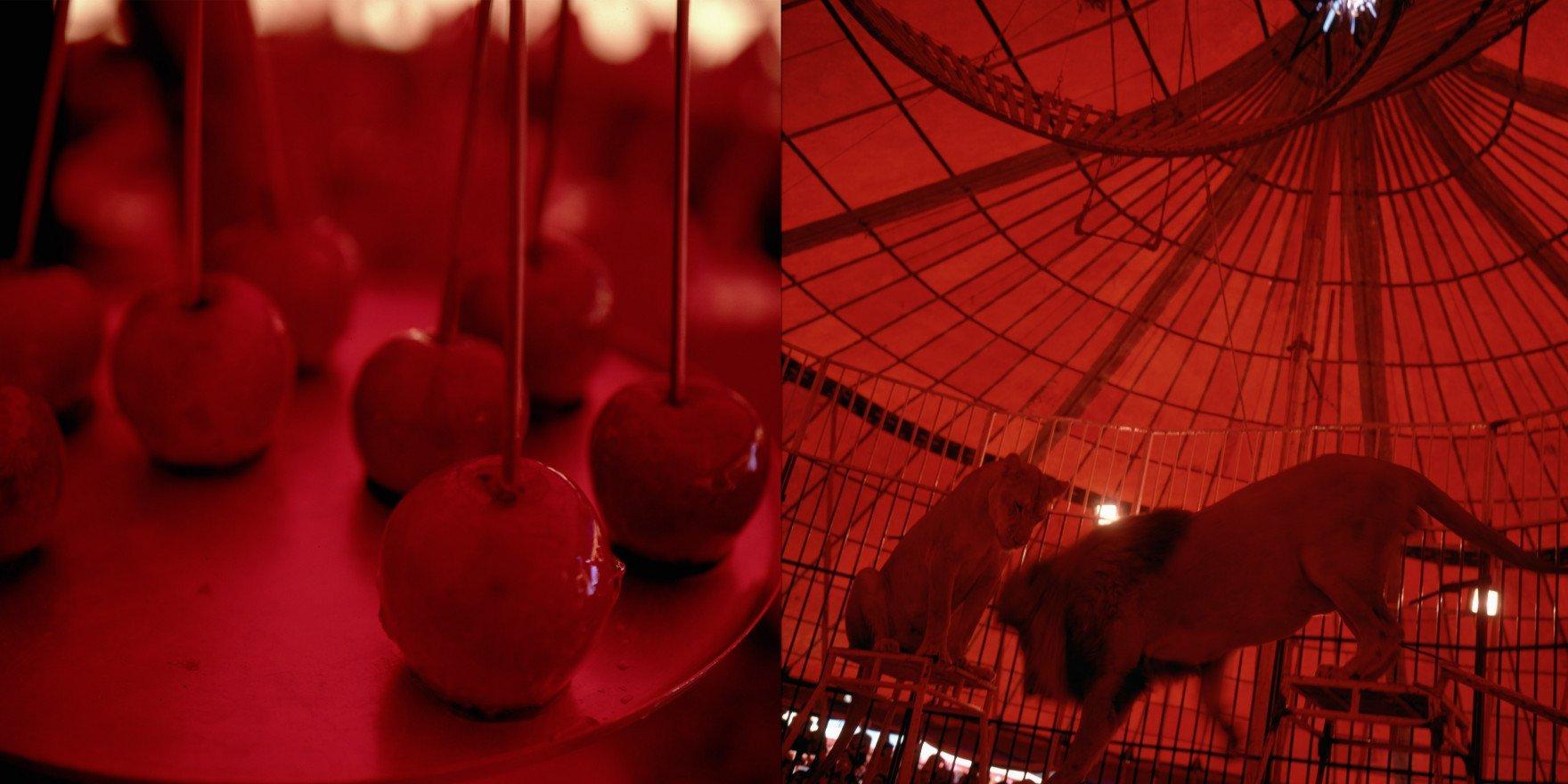 """""""Apple Lioness"""", 2011, de Miguel Rio Branco"""