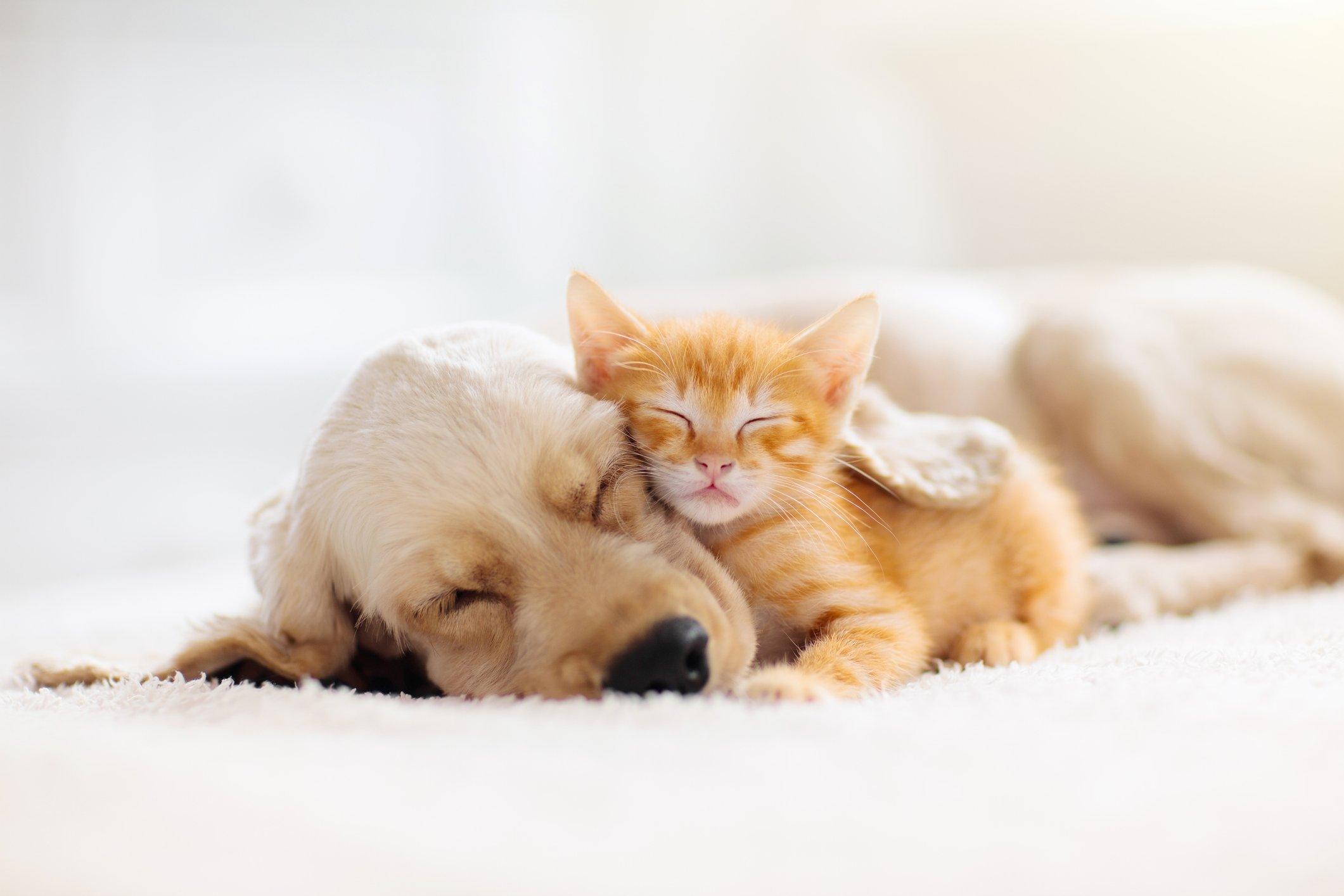 Brasil poderá ter marco regulatório dos animais de estimação | Exame