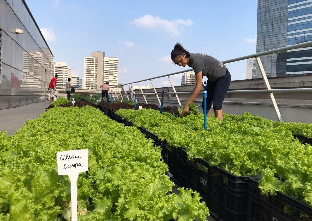 Edileusa Andrade, da Plant Fazendas Urbanas