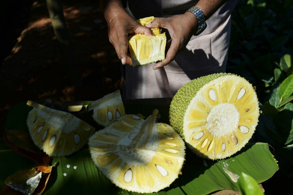 Originária da Índia, a jaca ganha o mundo como supercomida vegana