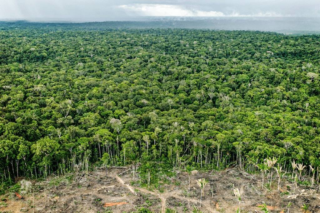 Floresta Amazônica tem grande potencial para gerar créditos de carbono