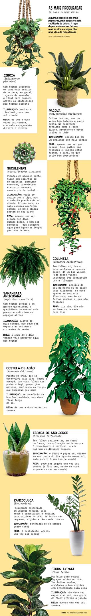 As plantas mais usadas na decoração