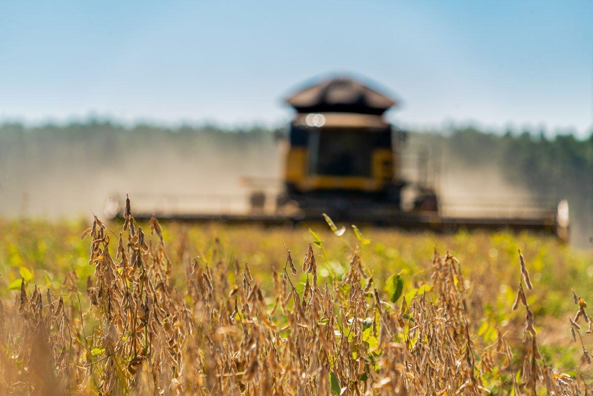 Podcast: como os flextarianos estão mudando o plantio de soja no mundo