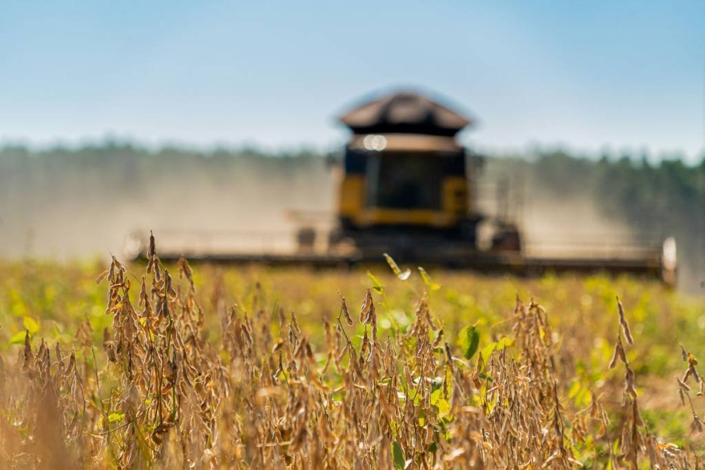 Fazenda Monica Cristina Ribas do Rio Pardo/MS Foto: Alexis Prappas 10/04/2020 agricultura - soja - plantação