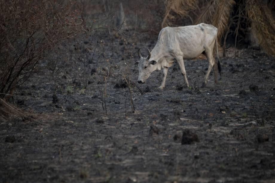 Incêndios no Pantanal causam devastação e emitem alerta climático