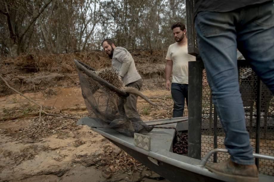 Voluntários resgatam animais após incêndios no Pantanal