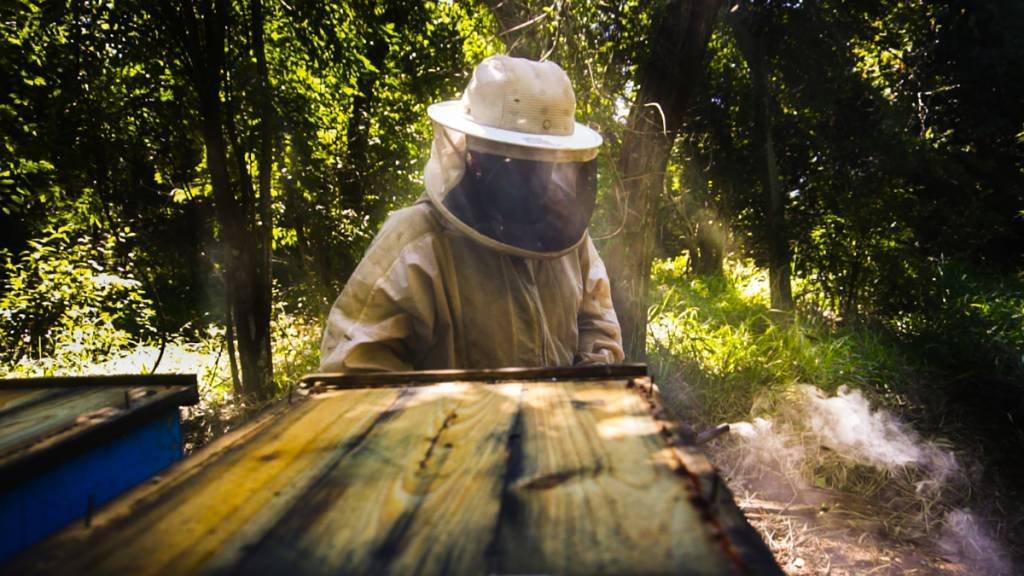 Apicultor trabalha em apiário em canavial da Cofco: empresa investe na capacitação dos produtores