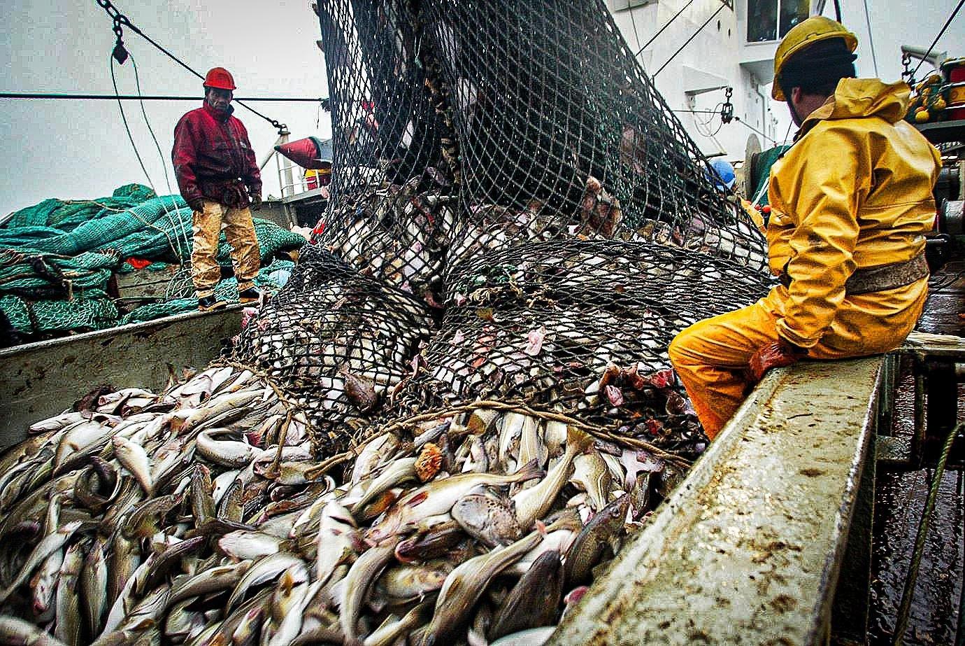 Acordo global para prevenir pesca predatória emperra na OMC | Exame