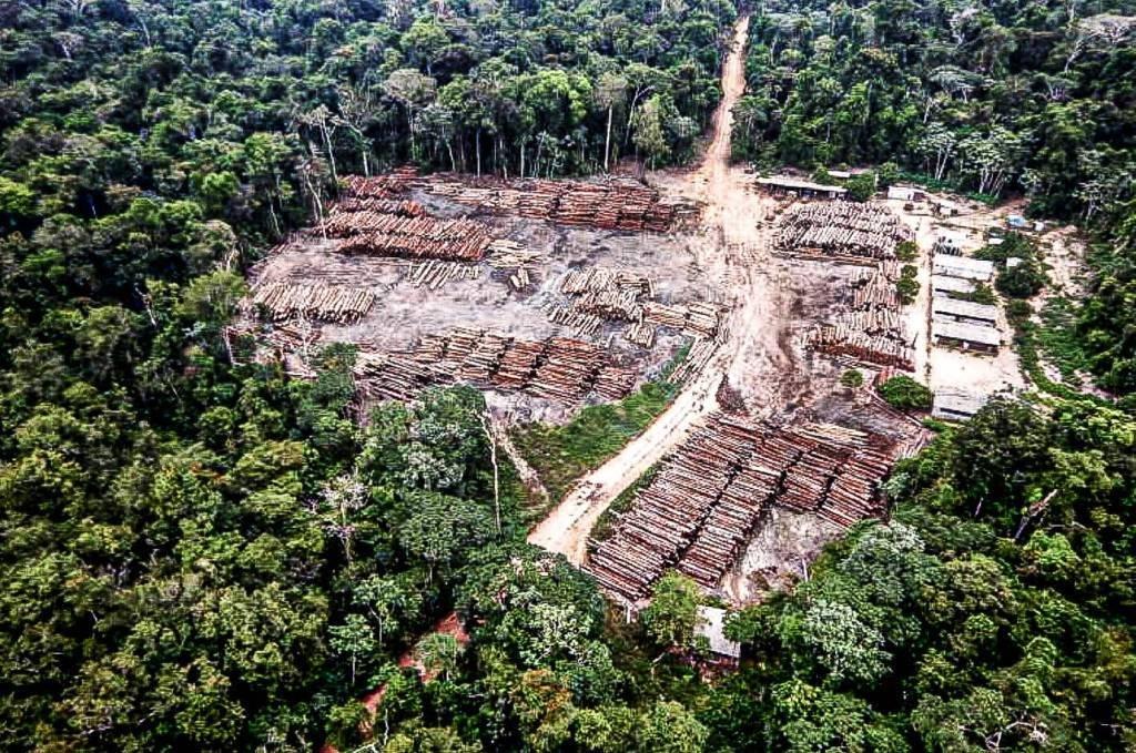 """Pará PA 22 12 2020 A Polícia Federal anunciou, ontem, ter feito """"a maior apreensão de madeira nativa da história do Brasil"""". Ao longo de vários dias, os agentes apreenderam 43,7 mil toras, com 131,1 mil metros cúbicos de madeira bruta, extraída de uma área de 20 mil quilômetros quadrados. Ela fica no extremo oeste do Pará, na divisa com o vizinho Estado do Amazonas. São as duas maiores unidades federativas do país (em conjunto, ocupam um quarto do território nacional).Só a madeira já computada é mais do que o dobro da maior apreensão anterior, efetuada 10 anos atrás, em 2010. Foram 65 mil metros cúbicos de madeira, retirada da Reserva Extrativista (Resex) Renascer, também no oeste do Pará.foto PF (via Amazonia Real)"""