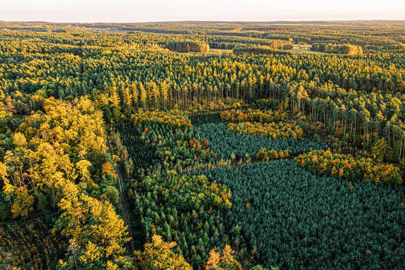 Floresta - sustentabilidade
