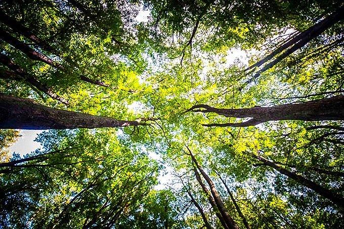 Florestas; natureza, meio ambiente; árvores