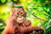 biodiversidade-perda-extinção