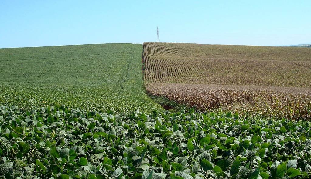 Lavouras de soja (à esquerda) e milho em Cruz Alta, Rio Grande do Sul