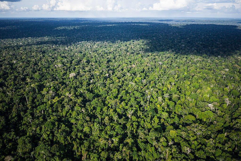 Às vésperas da COP26, EXAME lança site sobre a Amazônia