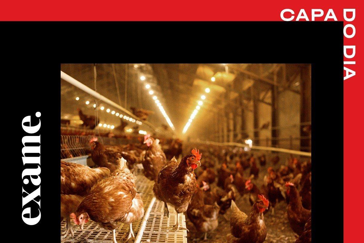 home_ovo_galinha_agricultura_regenerativa