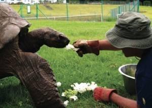Tartaruga Jonathan, o animal mais velho do mundo
